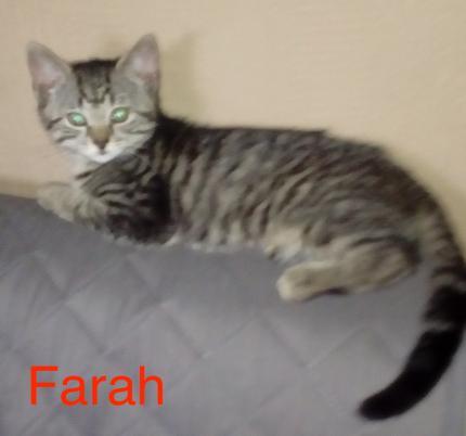 Farah1.jpg
