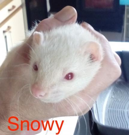 Snowy.jpg